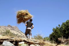 A young boy working hard. A young man working hard with has hands to gather dried hay to his cow in the winter in a village of kurdistan Stock Images