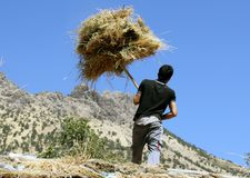 A young boy working hard. A young man working hard with has hands to gather dried hay to his cow in the winter in a village of kurdistan Stock Image