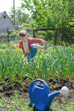 Young boy working in the veggie garden Royalty Free Stock Photography