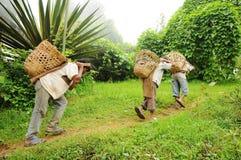 Young Boys-Arbeit hart als Träger, Indien stockfoto