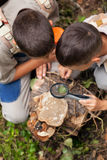 Young boys on a camping investigated nature using magnifying gla Royalty Free Stock Photos
