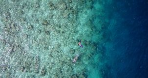 Young boys girls snorkeling over coral reef with drone aerial flying view in crystal clear aqua blue. Many people young boys girls snorkeling over coral reef royalty free stock photography