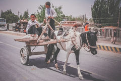 Young boys riding horse cart Royalty Free Stock Image