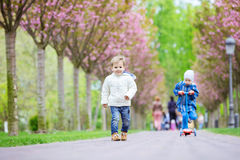 Young boys on walk in spring park Royalty Free Stock Images