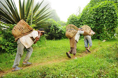 Young Boys work hard as porters, India stock photo