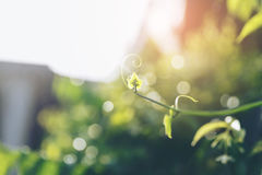 Young branch. Sunlight shining to youg green tree branch Royalty Free Stock Image