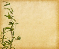 Young branches of a bamboo on old paper background. Young branches of a bamboo with water drops  on old paper background Stock Image