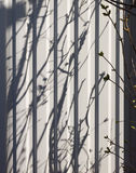 Young branches with shadow. Young branches bush with shadow royalty free stock photo