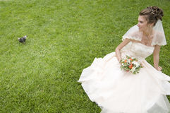 Young bride on a grass with pigeon Stock Photos