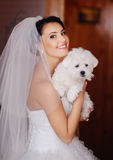 Young bride with a tiny dog Royalty Free Stock Photo