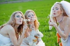 Young brides Stock Photos