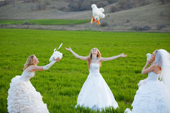 Young brides Stock Photos
