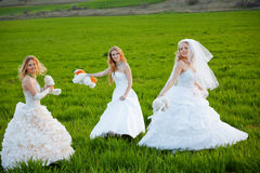 Young brides Stock Image