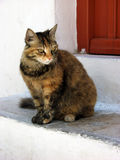 Young brindle longhair kitten sad looking in front of brown house door Stock Images
