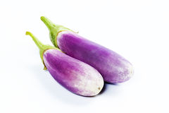 Young brinjal Stock Photos