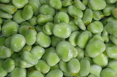 Young broad beans Royalty Free Stock Photography