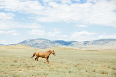 Young brown horse running across the field. Summer, outdoors. Crimean nature. Horse running across the field stock photo