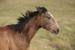 Young brown horse running Stock Photo