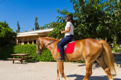 Young brunette on a brown-blond horse in the Royalty Free Stock Image