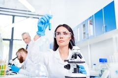 Young brunette cute lab worker in safety glasses is analysing th. E sample in the lab tube. She is in a labcoat, in the middle of work with experiment Royalty Free Stock Photography