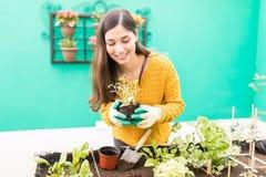 Happy Woman Enjoying Gardening In Yard. Young brunette wearing sweater while planting in backyard royalty free stock image