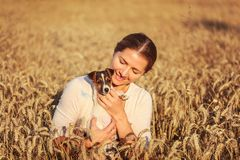 Young brunette woman, holding and looking down to Jack Russell terrier puppy in her hands, sunset lit wheat field in background royalty free stock photo