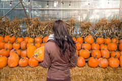 A young brunette woman holding a pumpkin in front of a row of pumpkins on a farm. stock photo