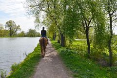 A young brunette woman in jeans and blue hoodie rides a bay horse along a path by the lake in the shade of a trees. Back view stock photos
