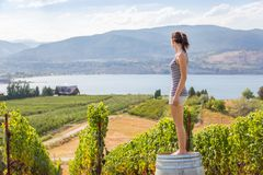 Young brunette woman sitting on a wooden wine barrel in front of a Okanagan vineyard. Young brunette woman sitting on a wooden wine barrel in front of a stock photos