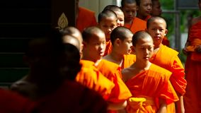 Young buddha novices are walk. Chiang Mai, Thailand - APRIL 13, 2015: Young novices were set into a line, April 13, 2015 in Chiang Mai, Thailand stock video footage