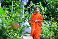 Young Buddhist Monk Stock Images