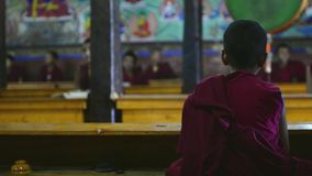 Young buddhist monk stock video