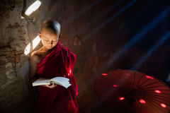 Young Buddhist monk reading royalty free stock photography