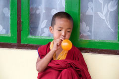 Young Buddhist monk at the Rumtek Monastery, Sikkim, India Royalty Free Stock Photo