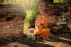 Young Buddhist novice monk. Reading and study outside with a cat lying on the side royalty free stock images