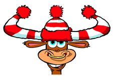 Young bull cartoon. Cartoon illustration of young laughing bull with red and white scarf and matching bobble hat, white background Stock Photos
