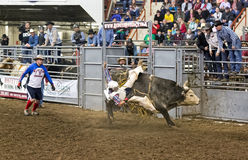 Young Bull Rider Royalty Free Stock Photos