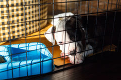 Young Bully dog. Young bully dog in cage sleeping Royalty Free Stock Images