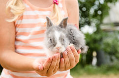 Young bunny rabbit in hands Royalty Free Stock Photo