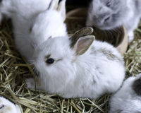 Young Bunny Rabbits. In cage Stock Photos