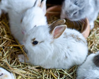 Young Bunny Rabbits. Lovely group of young Bunny Rabbits Stock Photos