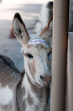 Young burro. With a sign on his forehead that says do not feed me Stock Photo