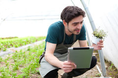 Young business farmer working on his tablet Royalty Free Stock Photos