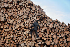 Young business man on his way to the top. Of the large pile of cut wooden logs Royalty Free Stock Photo