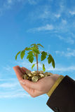 Young business series. Small plant sprouting from a pile of golden coins held in a hand, against blue skies - concept for business, innovation, growth, new ideas Royalty Free Stock Images