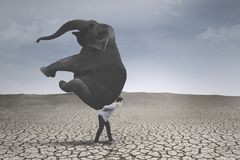 Young businessman with elephant on dry soil Stock Photo