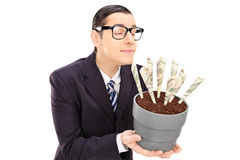 Young businessman smelling the scent of dollars in a flowerpot. Young businessman smelling the scent of US dollars in a flowerpot isolated on white background royalty free stock image