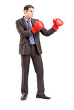 Young businessman in suit with red boxing gloves Royalty Free Stock Images