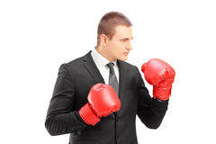 Young businessperson in suit with red boxing gloves posing. Isolated on white background Royalty Free Stock Image