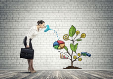 Young businesswoman in empty room watering drawn growth concept with can Royalty Free Stock Image